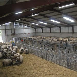 Prefabricated steel sheep farm